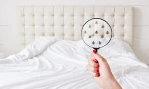 how to get rid of weevils in my bedroom